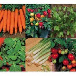 Collectie Zomergroente - 6 groentesoorten - zaden kopen  Jalapeno